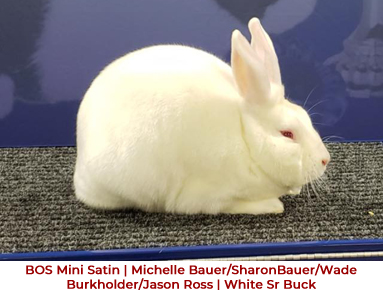 American Satin Rabbit Breeders - National Events