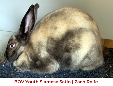 2019 Convention BOV Youth Siamese Satin