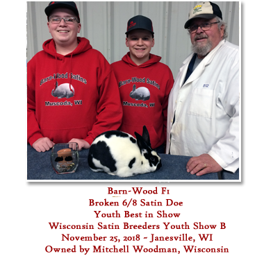 Barn-Wood F1 - Broken 6/8 Satin Doe - Youth Best in Show - Wisconsin Satin Breeders Youth Show B - November 25, 2018 ~ Janesville, WI -Owned by Mitchell Woodman, Wisconsin