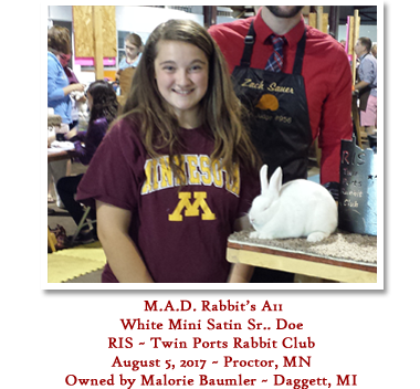 M.A.D. Rabbit's A11 - RIS Twin Ports Rabbit Club - June 5 - White Sr Doe Owned by Malorie Baumler
