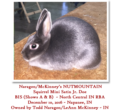 BIS Squirrel Jr Mini Satin Doe - Owned by Todd Naragon & LeAnn McKinney - IN